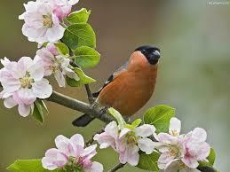 Ptaszek i kwiaty